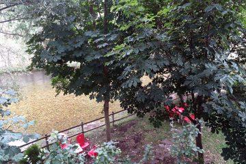 Venta de Goyo - Viniegra de Abajo 2