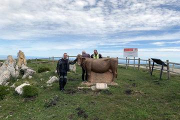 Vaca Pasiega